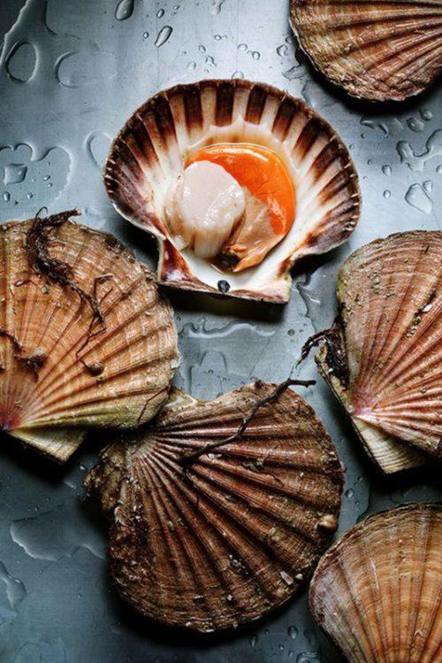 Cappesante, vongole & frutti di mare