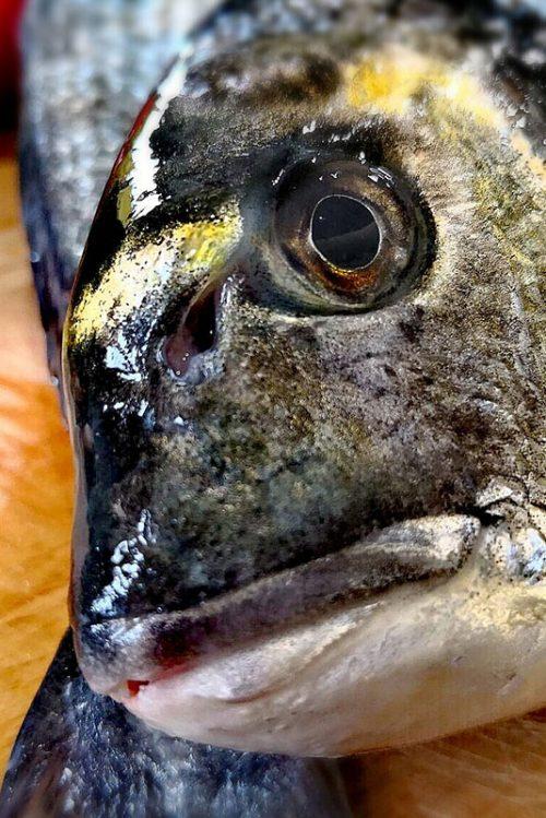 Pesce allevato e bio