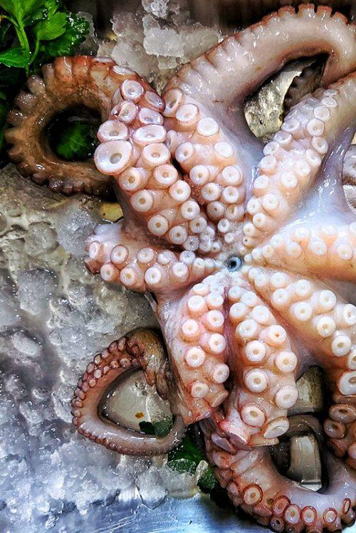 Polipetti e Calamari