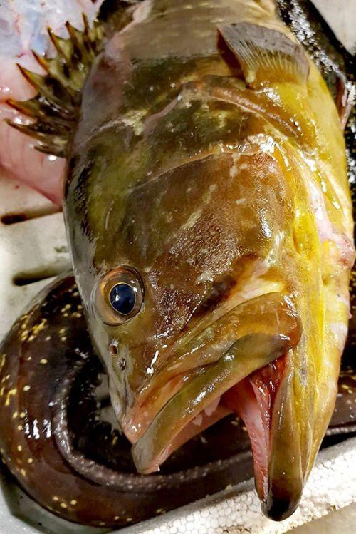Spada, cernia & pescato al trancio