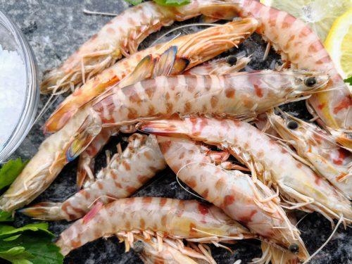 Mazzancolle Mazara Sicilia 24fish